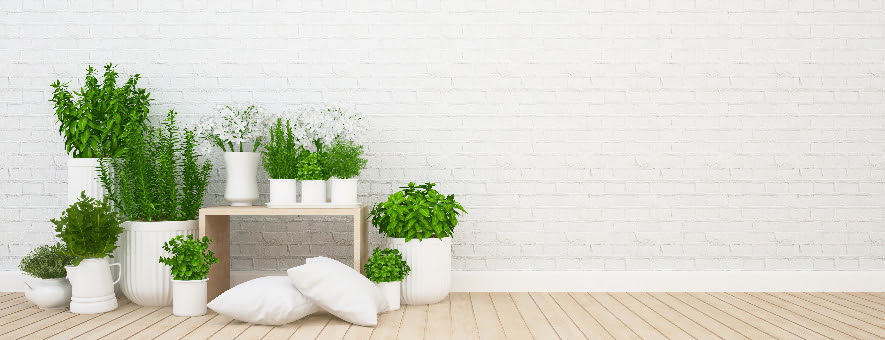 Using plants around your hotel can help guests relax.